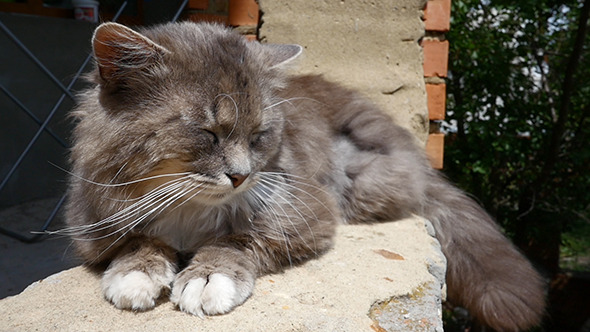 VideoHive Cat Resting On The Curb 12241287