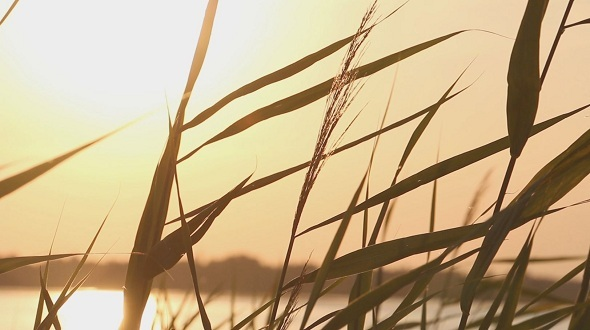VideoHive The Reeds on The River 12243226