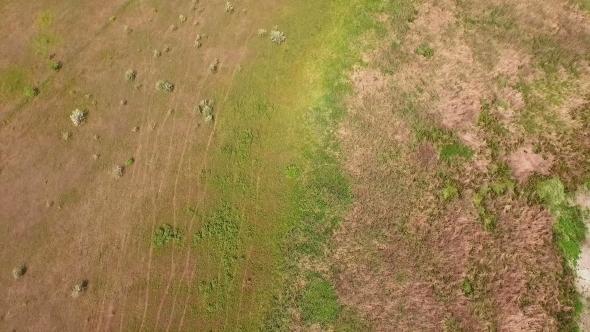 VideoHive Flight In Field Camera Tilt Up 12250683