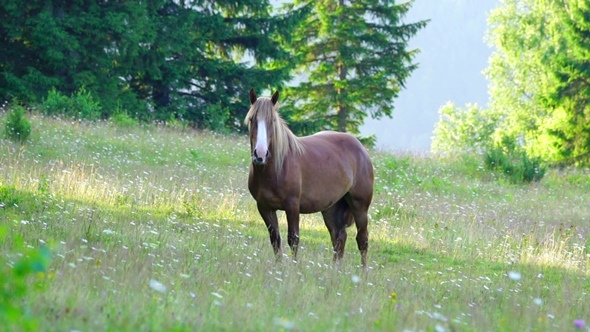 VideoHive Horse Grazing in a Meadow 12260546