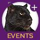 Random Events – Jaguar Game Engine Addon (Miscellaneous) Download