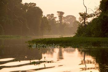 Trees and jungle on the Catatumbo River, Lake Maracaibo, Venezue