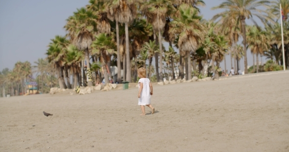 VideoHive Curious Little Girl Approaching a Seagull 12279924