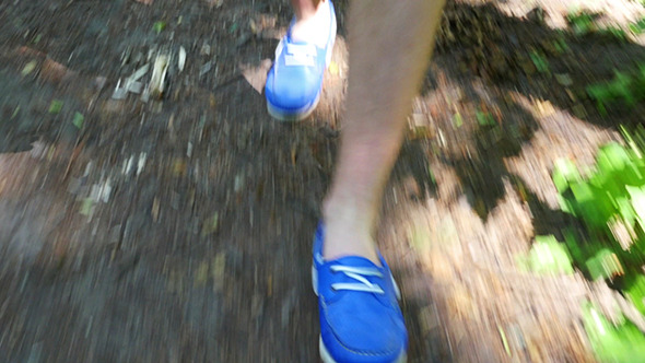 VideoHive Walking Legs In Forest 12282003