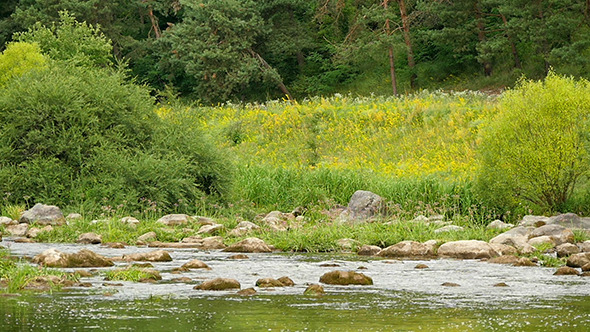 VideoHive Landscape Of The River With Stones And Plants 12298891