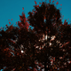 Fall Beauty - VideoHive Item for Sale