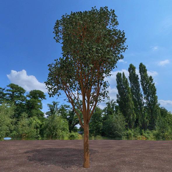 3DOcean High detailed tree 12321693