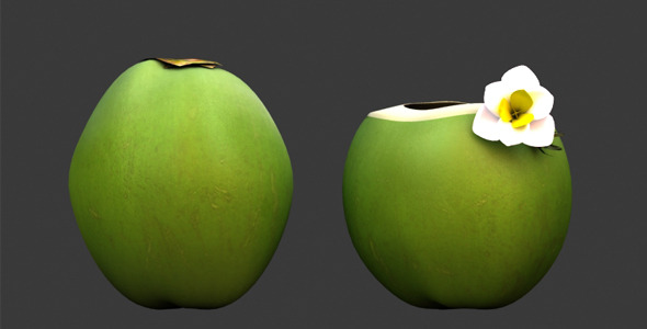 3DOcean 3D Model- Coconut 12322041