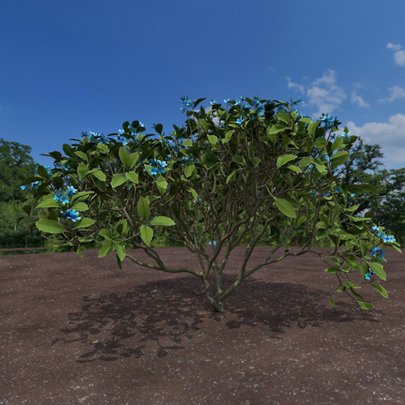 3DOcean blue shrub 12322346
