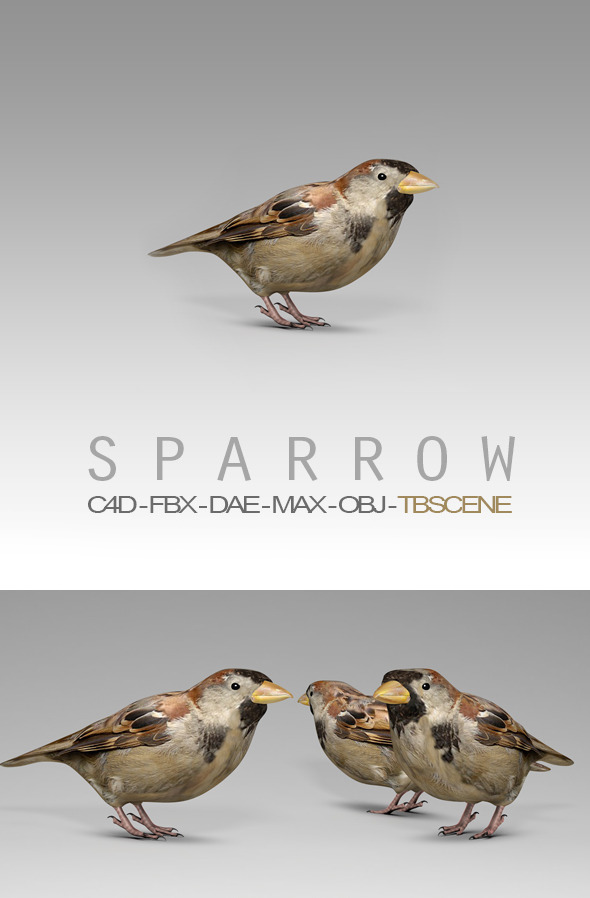 3DOcean Simple House Sparrow Bird 12323423