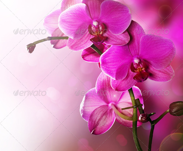Orchid Flower Border Design - Stock Photo - Images