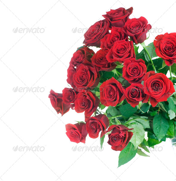 Red Roses Bunch Border Over White - Stock Photo - Images