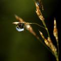 Water drop - PhotoDune Item for Sale