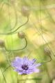Flora - PhotoDune Item for Sale