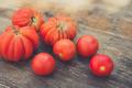urban gardening bio tomato