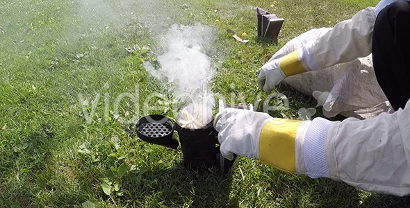 VideoHive Fumes for Bees 12212080