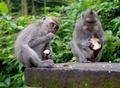Two Monkeys Eating - PhotoDune Item for Sale