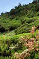 Plateau of Parque natural de Madeira, Madeira island,  Portugal - PhotoDune Item for Sale
