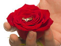 Rose with wedding ring for valentine`s day - PhotoDune Item for Sale