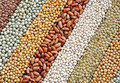 Legume - mixture of dried lentils, peas, soybeans, beans  - background - close up - full frame - PhotoDune Item for Sale