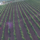 Vineyard at Sunset               <small class=