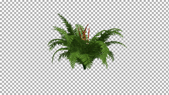VideoHive Fern On The Wind Isolated 2 12401481