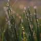 Golden Hour Rain - Grass