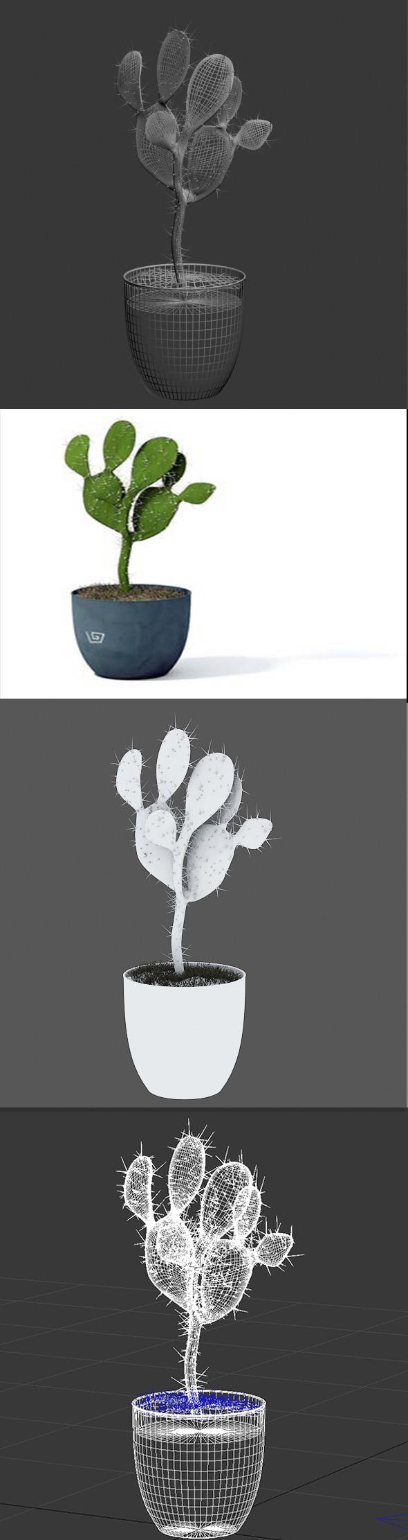 3D Cactus pot plant model 3 - 3DOcean Item for Sale