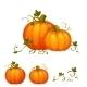 Fresh Two Pumpkin With Sweet Green Leafs