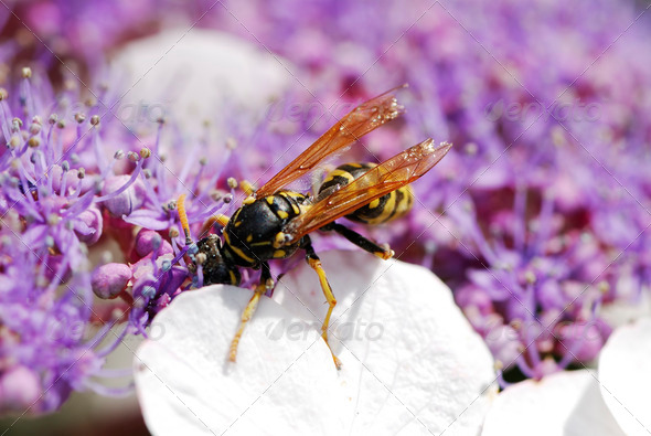 Wasp - Stock Photo - Images