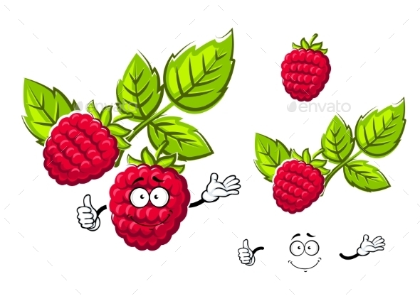 Ripe Isolated Red Rasberry Fruit