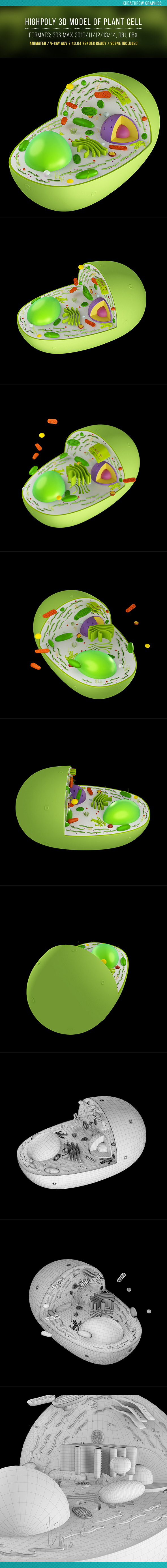 Plant Cell Structure - 3DOcean Item for Sale