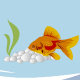 Goldfish - ActiveDen Item for Sale