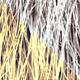 Shave Animal Fur1
