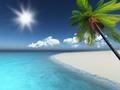 3D render of a palm tree on a sandy beach