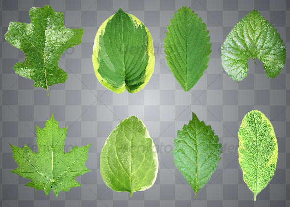 SET OF EIGHT GREEN LEAVES #2