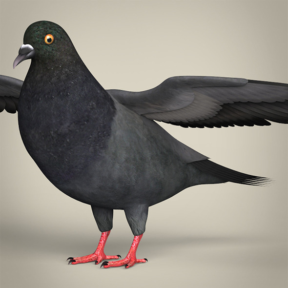 Realistic Pigeon Bird - 3DOcean Item for Sale