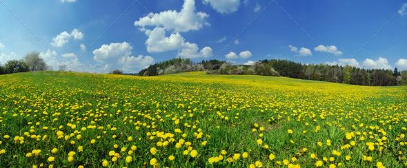 PhotoDune Spring 1270666