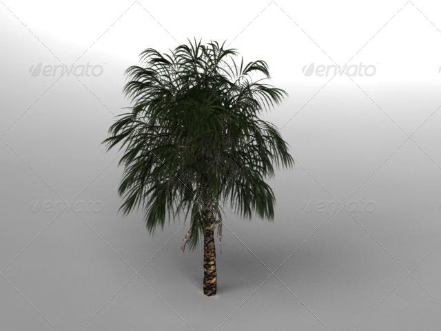 3DOcean Palm tree 152804