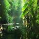 The Spirit of Jungle