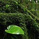 Life in Nature Forest - VideoHive Item for Sale