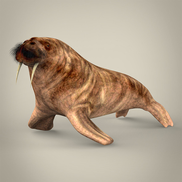Realistic Walrus - 3DOcean Item for Sale
