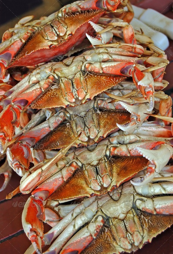 Crabs - Stock Photo - Images