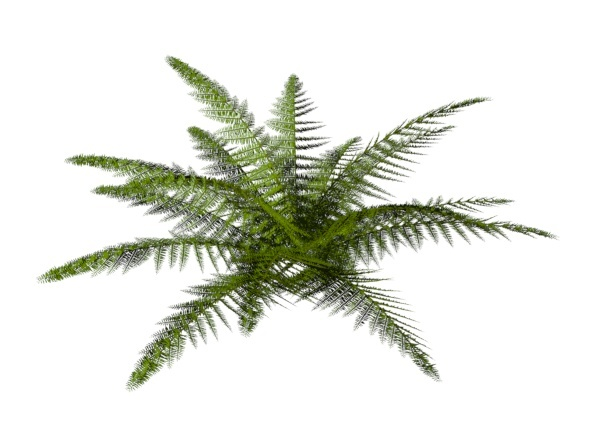 Tassle Fern - 3DOcean Item for Sale