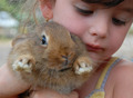 little girl and bunny - PhotoDune Item for Sale