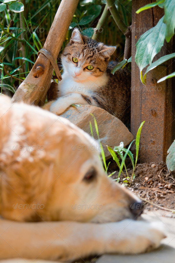 Portrait of a cute little cat and dog - Stock Photo - Images