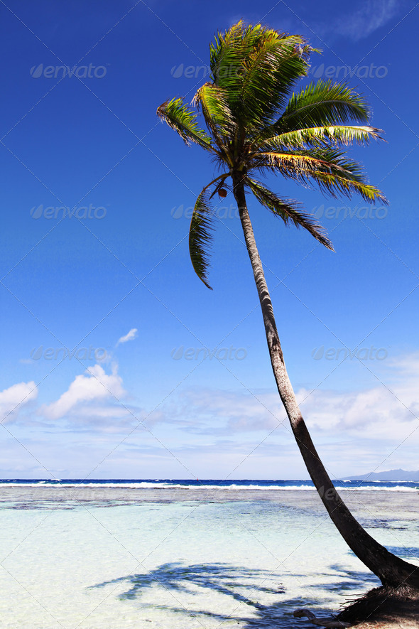 Palm tree on a tropical island - Stock Photo - Images