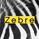 Zebre - Minimal, Agency & Porfolio WP Theme