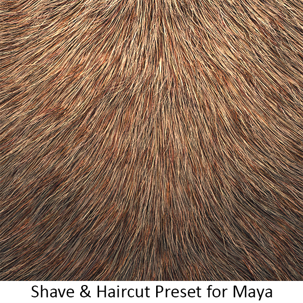 3DOcean Shave Animal Fur3 12839138