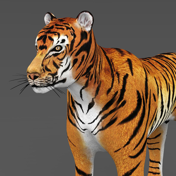 Realistic Tiger - 3DOcean Item for Sale